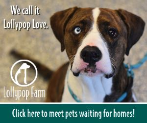 Lollypop Farm - Ad